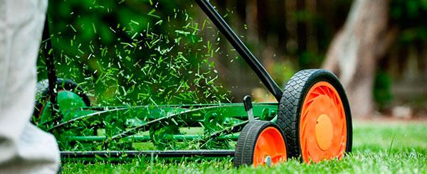 Cuidamos y controlamos la salud del jardín de su comunidad